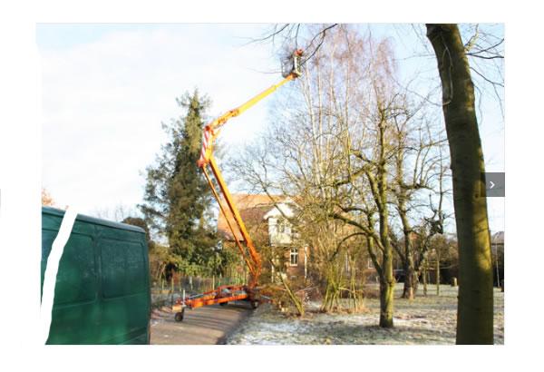 Baum_Verkehrssicherung
