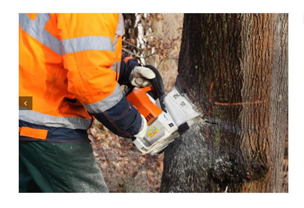 Baumbewertung_Gutachten in der Nähe von  Ostereistedt